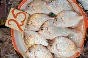 PlateOfFish_800W