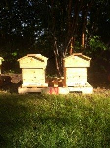 beekeeping in Edmonton