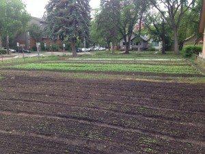One of Reclaim Urban Farms' plots. Photo courtesy of Reclaim Urban Farm.
