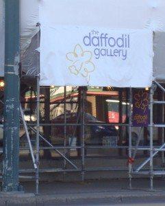 Daffodil Gallery