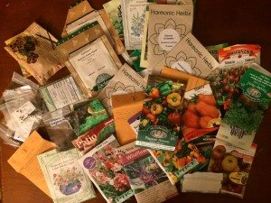 Hoarding seeds? Bring them to a Seedy Sunday seed swap! Photo: Elyse Williams
