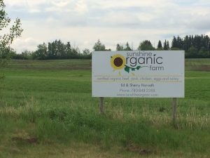 Sunshine organic Farm in Alsike, AB. Photo: Elyse Williams
