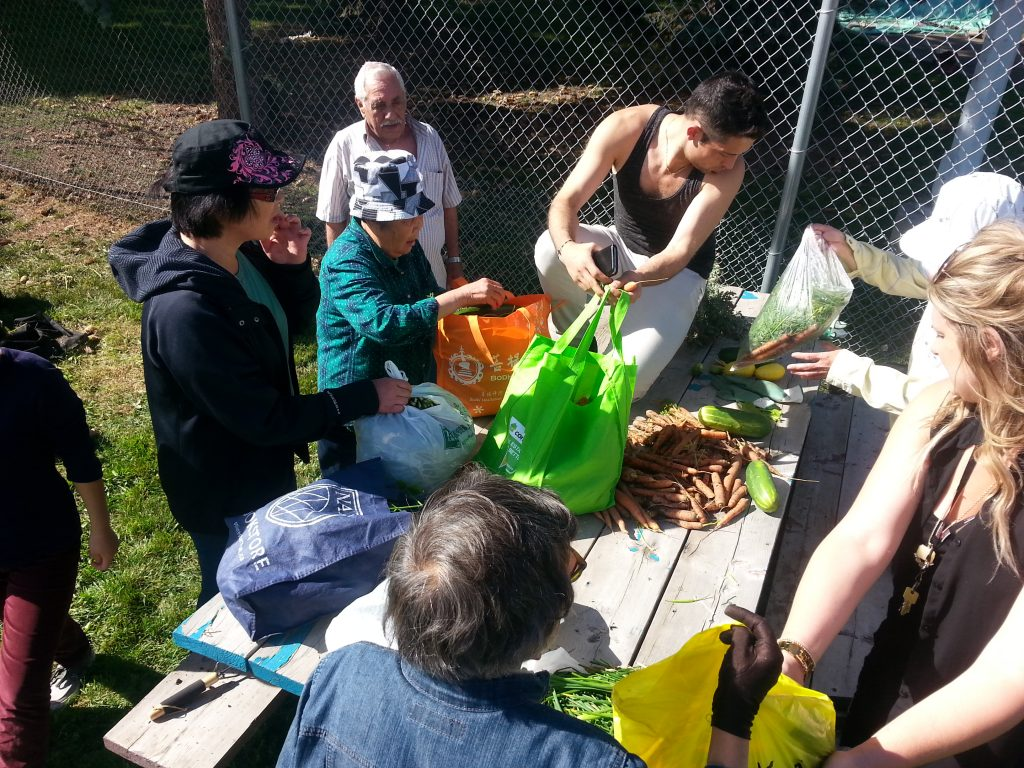Urban Farm Kits Group